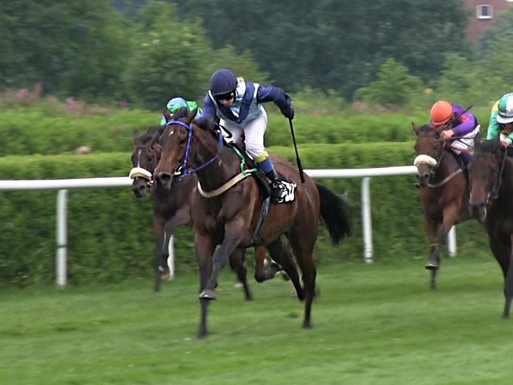 Wie Schnell Können Pferde Rennen