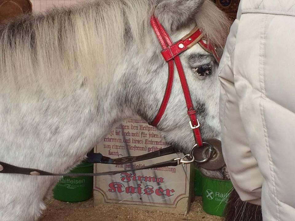 """Ein trauriges Pony im """"Ponykarussell"""" / © PETA Deutschland e.V."""
