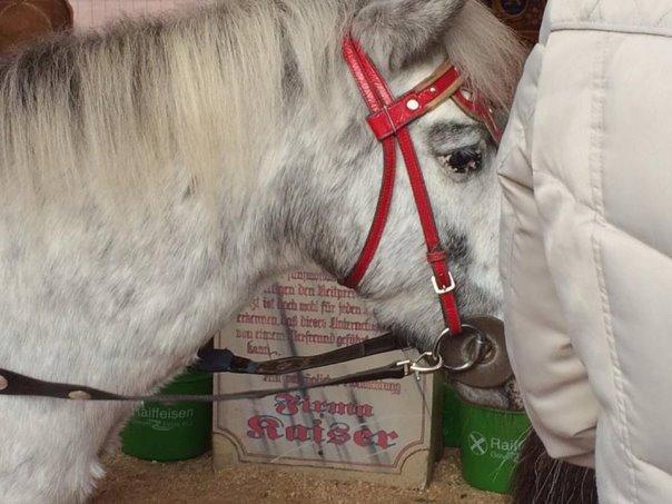 2016-12-17-Ponykarussell-Dortmund-04-c-PETA-D.jpg